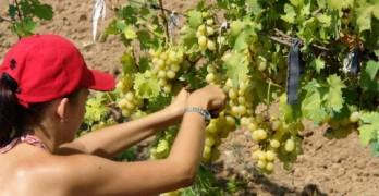 Ще обучават специалисти по лозарство и винарство в Харманли