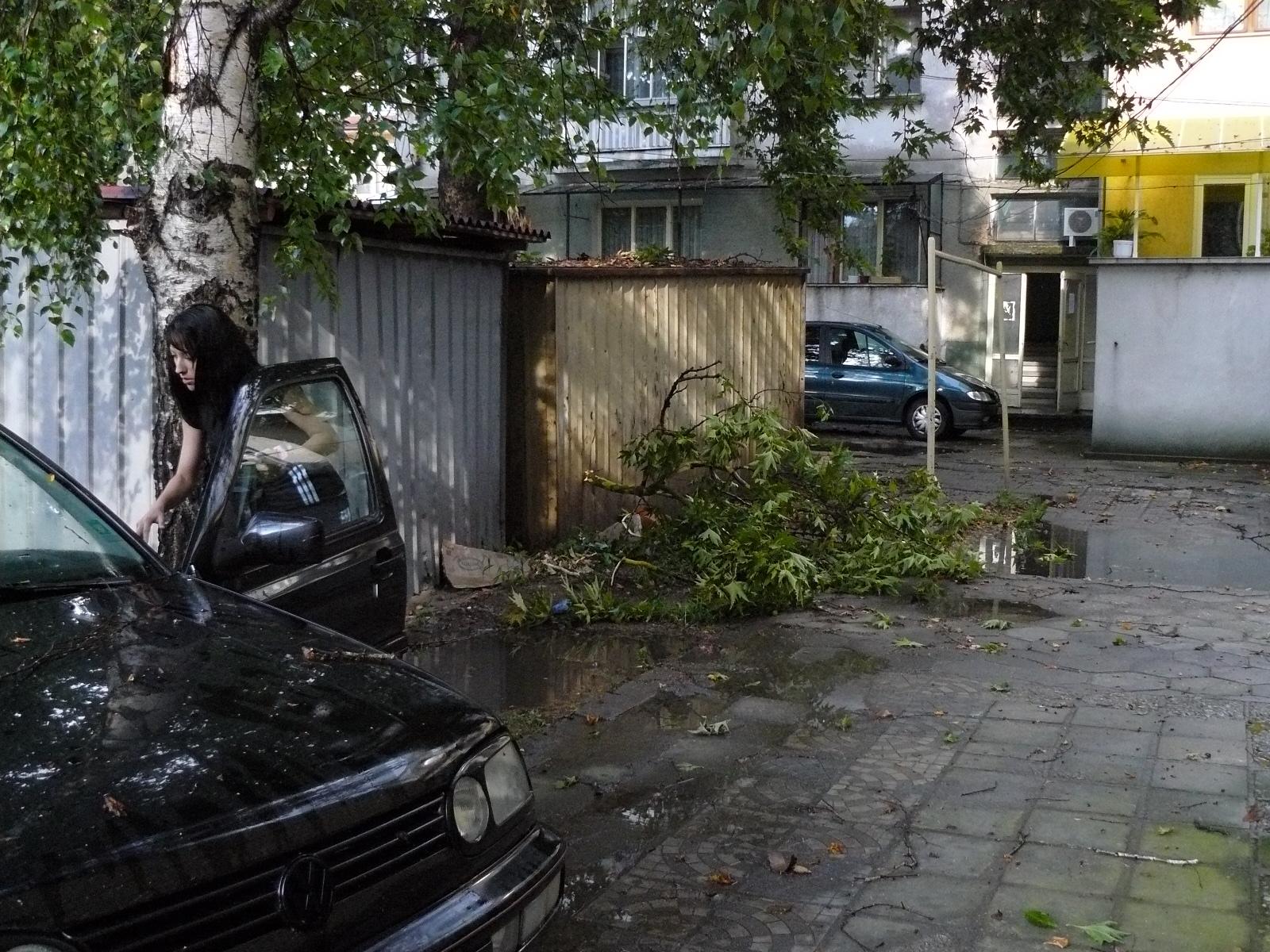 Буря изкоренява дърва, затваря улици в града