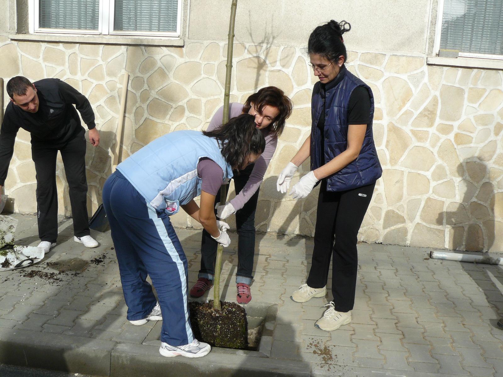 """Засадиха 71 дървета по улица """"Александър Стамболийски"""""""