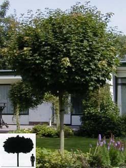 """Залесяват """"Александър Стамболийски"""" с дървета от Италия"""