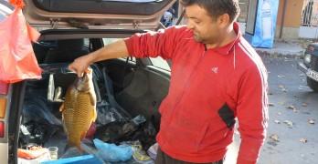 Шест лева за килограм шаран, търсенето тази година – по-слабо