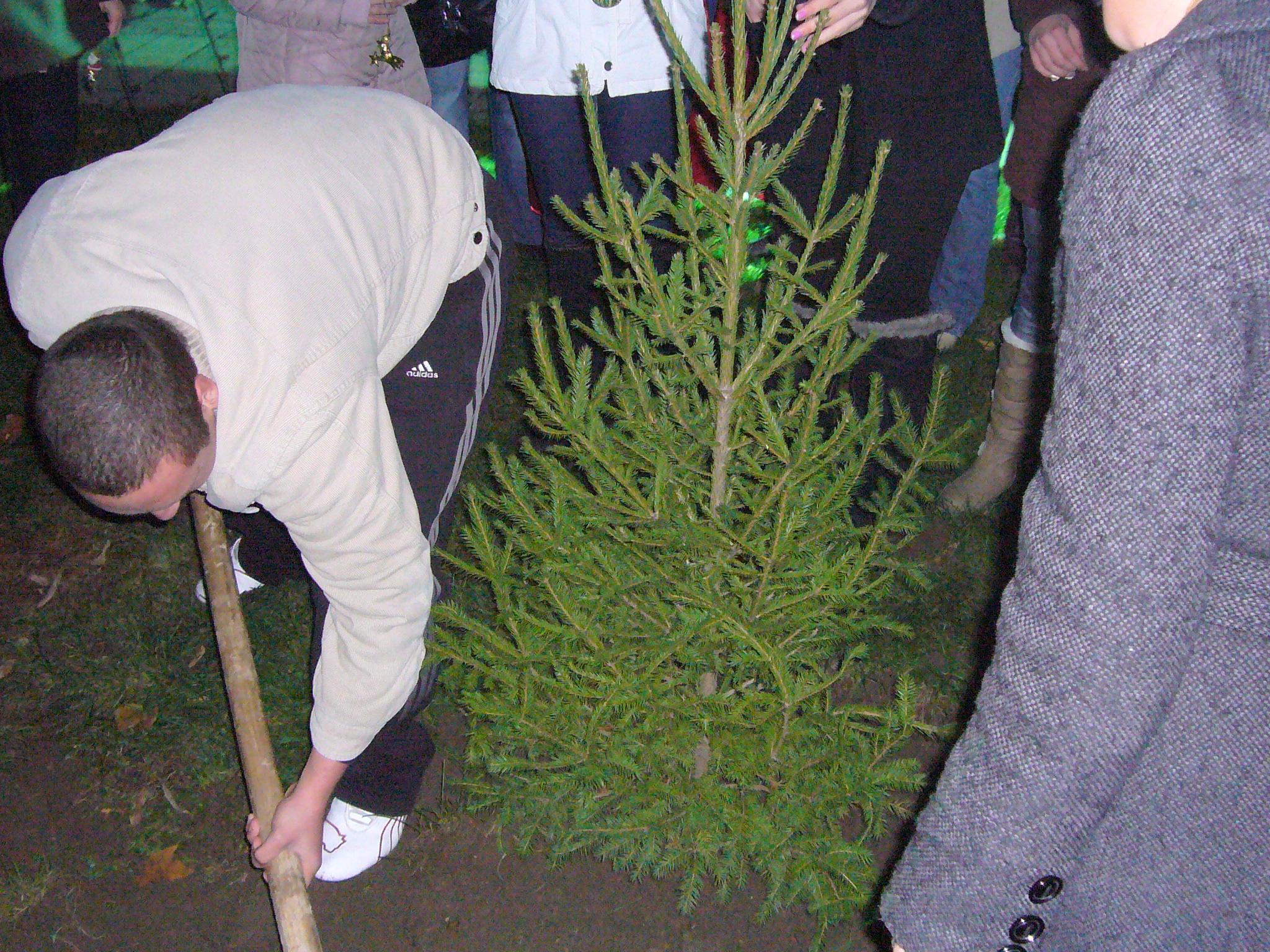 В Свиленград грейна 10-метрова елха, в Любимец ритуално засадиха дръвче