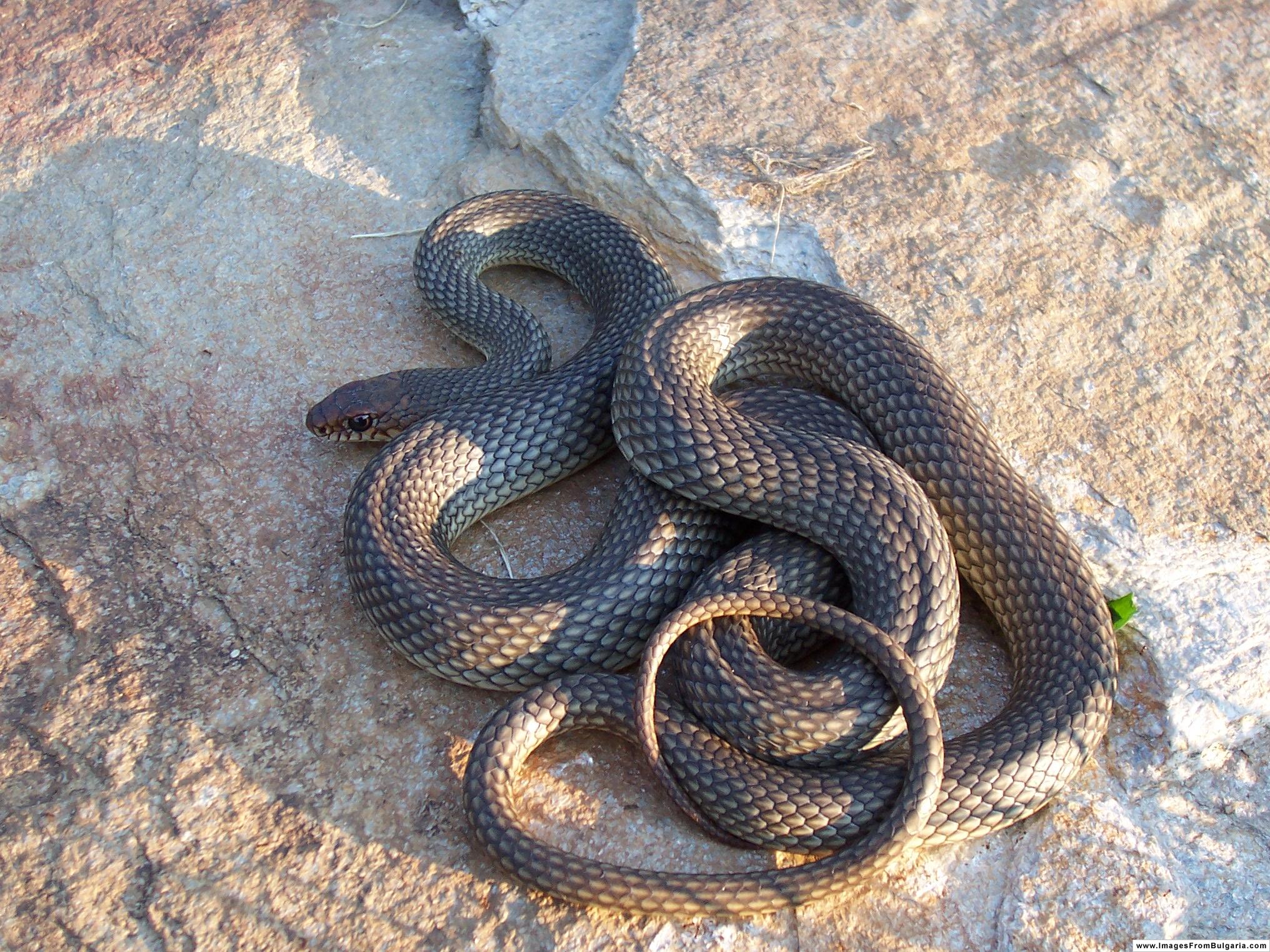 Търсиха змия в къща