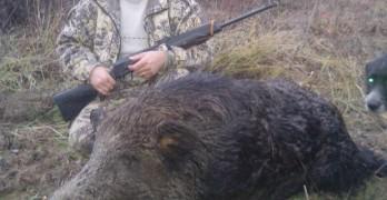 Ловец повали 220-килограмов глиган с един изстрел