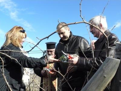 Министърът на вътрешните работи Цветан Цветанов заряза на лозето в Любимец
