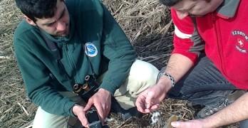 Застреляха орела Кралчо, който преди година бе спасен от служители в общината