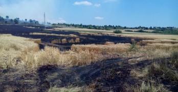 Изгоряха 30 дка пшеница в Димитровче