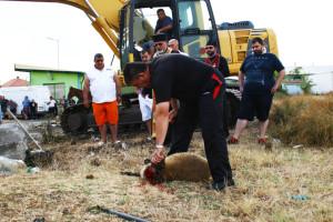 По стара българска традиция в жертва бе дадено животно, за да са здрави основите на строежа