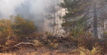 Мигранти изгориха 20 дка гора