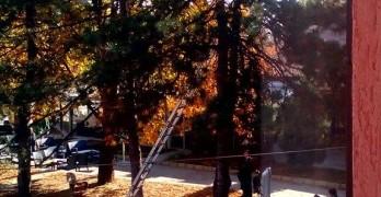 Пожарникари сваляха котка от високо дърво