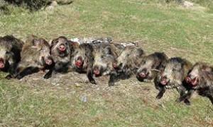 45 хиляди лева, събрани от ловците в Лисово, изчезват яко дим