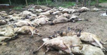 Масово убийство в Странджа