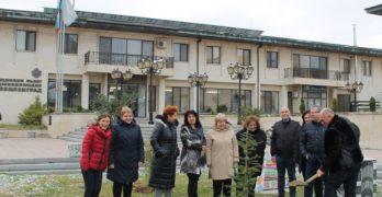 Подаряват на Манолов кедър, той го засади пред кметството на Свиленград