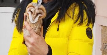 Птица от защитен вид е спасена  от училище в Свиленград