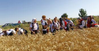 """""""Празник на жътвата, кулинарията и занаятите"""" се проведе за пети път в Сива река, Свиленградско"""