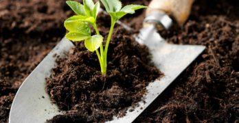 Биологични торове за биопродукция
