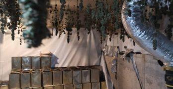 Свиленградските полицаи спипаха любимчанка да произвежда канабис за десетки хиляди