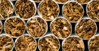 Полицаи прибраха 6 стека цигари на Капитана, Свиленградско