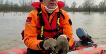 В Одрин спасиха 3 бездомни кученца от водите на придошлата Тунджа