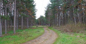 Процедура за изграждане на нов парк в боровата гора стартира община Свиленград