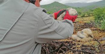Служители на EVN спасиха паднал от гнездото си млад щъркел