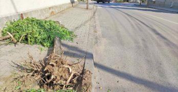 Мерцедес изтръгна от корен дърво в центъра на Свиленград