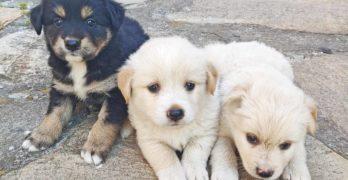 В Свиленград подаряват малки кученца за обичане