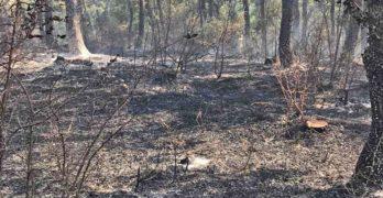 Прокуратурата извършва разследване на причините за пожара в борова гора край Стоманци